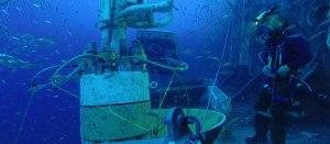 diving-1200x525-final